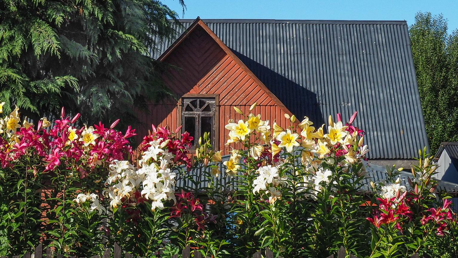So schöne gepflegte Blumengärten in Puyuhuapi