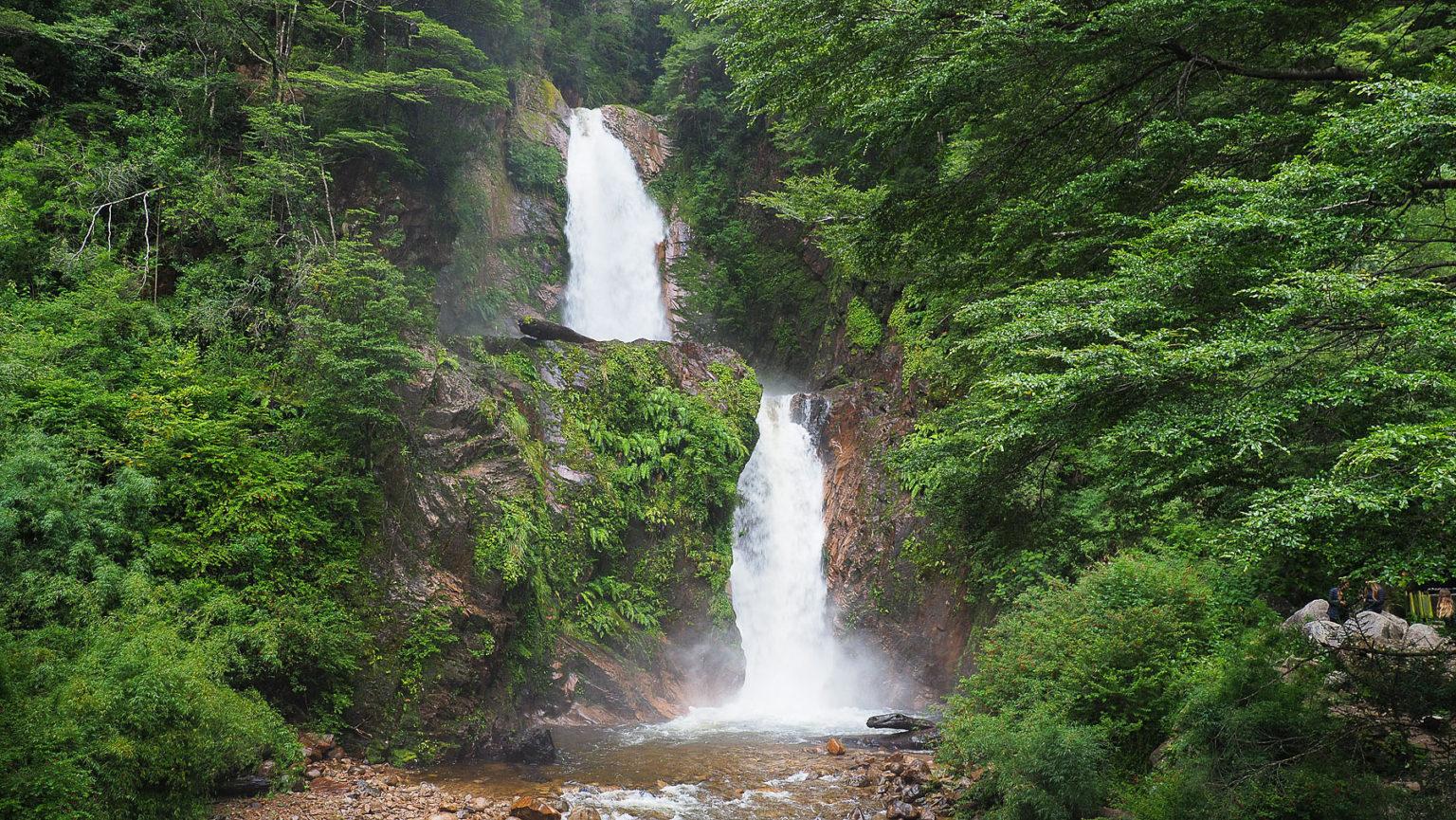 Wir sind im größten zusammenhängende Waldgebiet mit gemäßigtem Regenwald in Chile