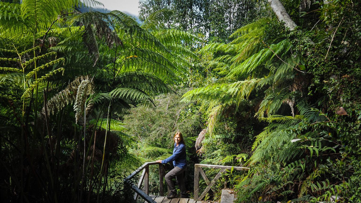 Es geht durch feuchte üppig bewachsene Gebiete und dichtesten Wald