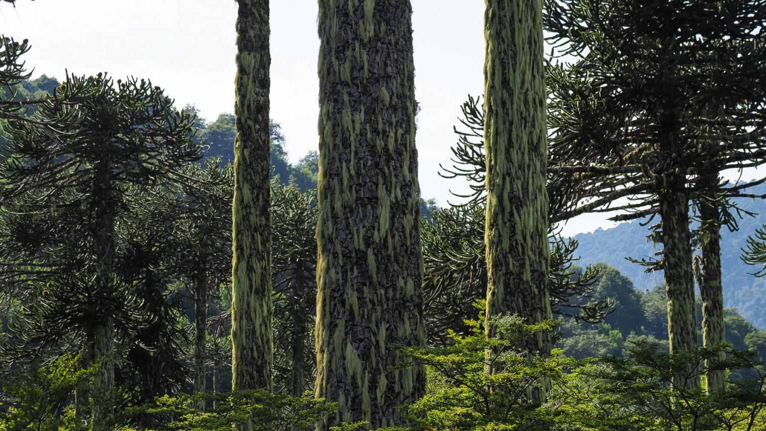 Ein exotischer, wunderschönen Wald