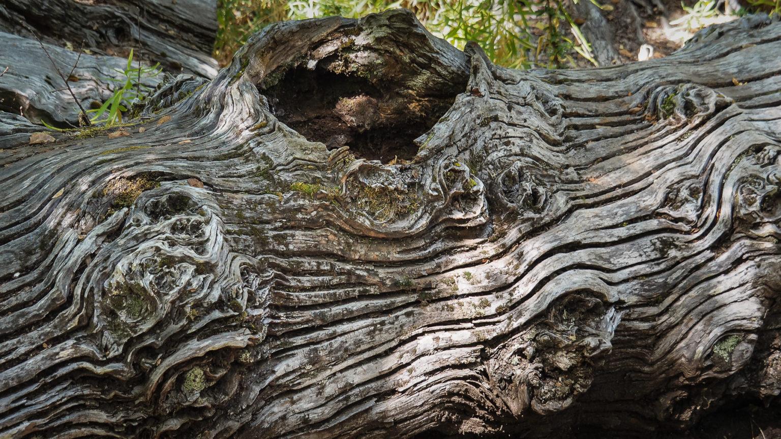 Schöne Muster im alten Holz